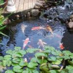 Koi Pond Designs Design No 13053