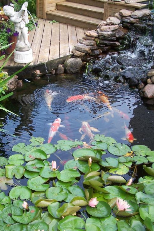 Koi Pond with Plants