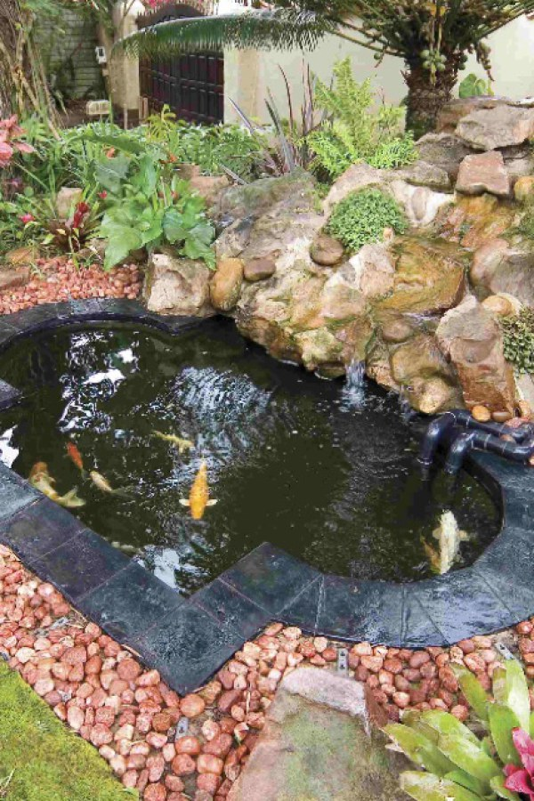 Koi Pond with Flowing Stone Water