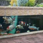 Koi Pond Designs Design No 13059