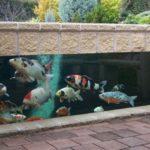 Koi Pond Designs Design No 13059