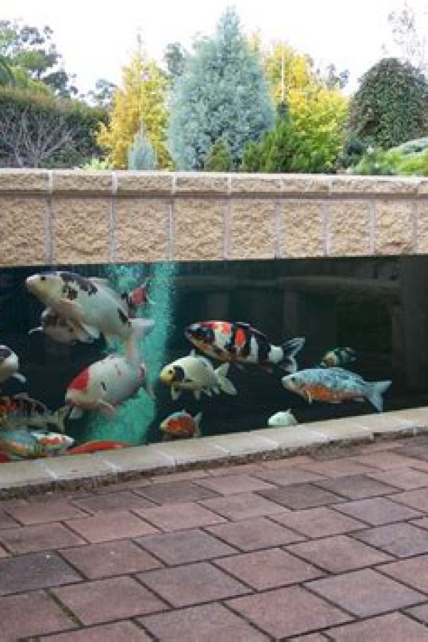 Koi Pond with Transparent Glass
