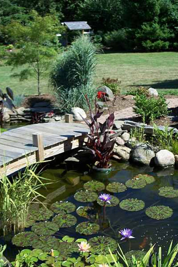Koi Pond with Wooden Bridge