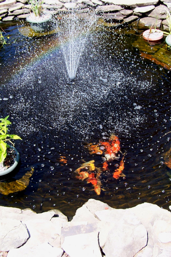 Koi Pond with Fountain