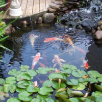 Koi Pond Designs Design No 13053